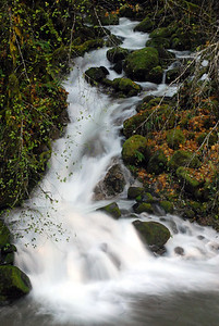 Mountain rivulet flowing into the South Santiam.