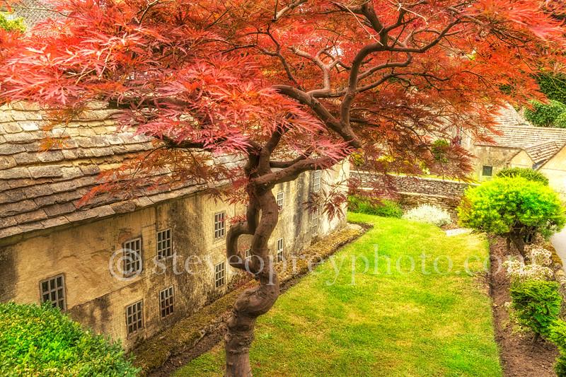 Red Leaf Tree