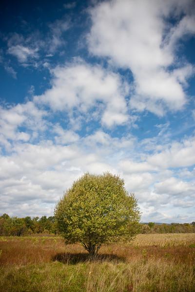 The Shawangunk Grasslands in autumn
