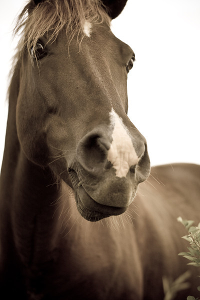 Horse near Mohonk Preserve in summer