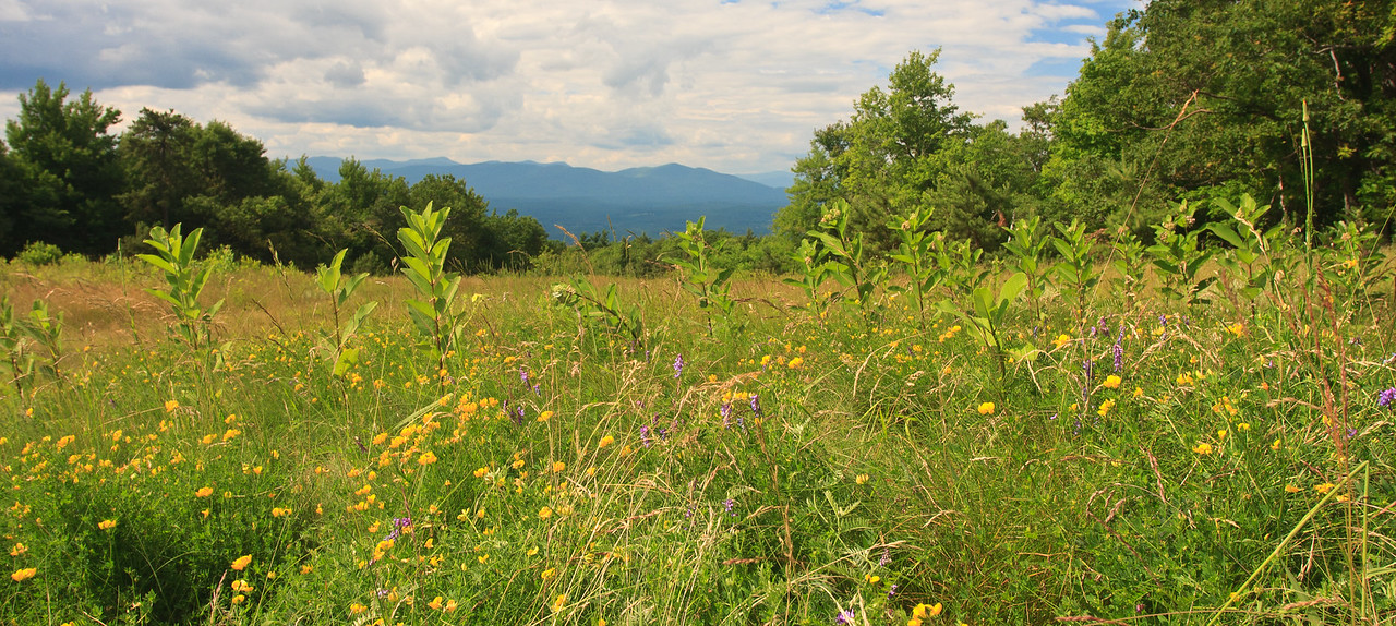 The Catskills in summer from Minnewaska State Park