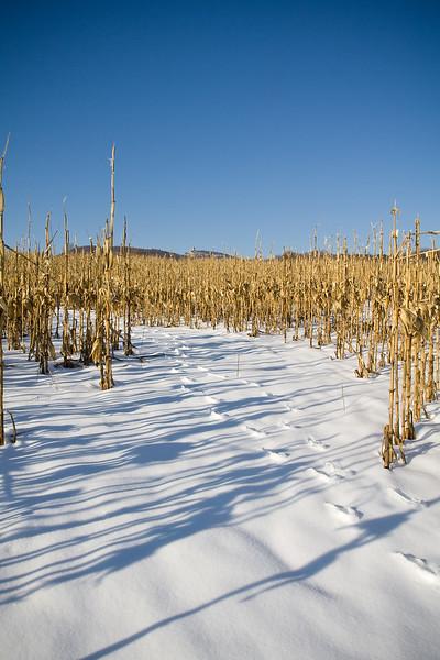 Dead corn fields and Sky Top in winter
