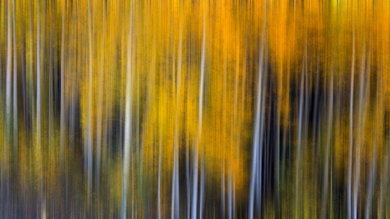 Aspen Abstract #1