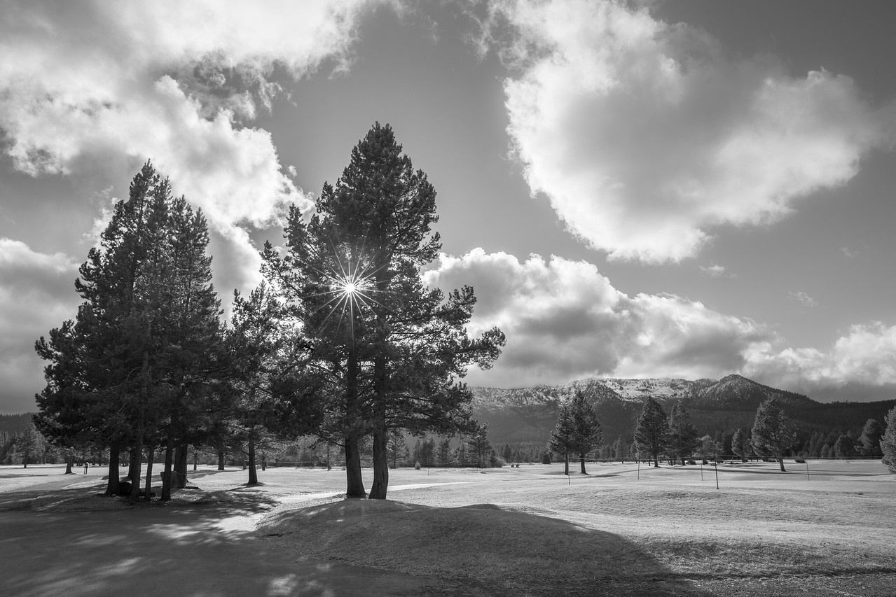 Colorless Sun Rays Shining through the Conifers