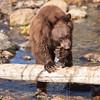 The Bear Cub and the Kokanee