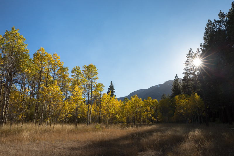 Golden Hour, Golden Aspens