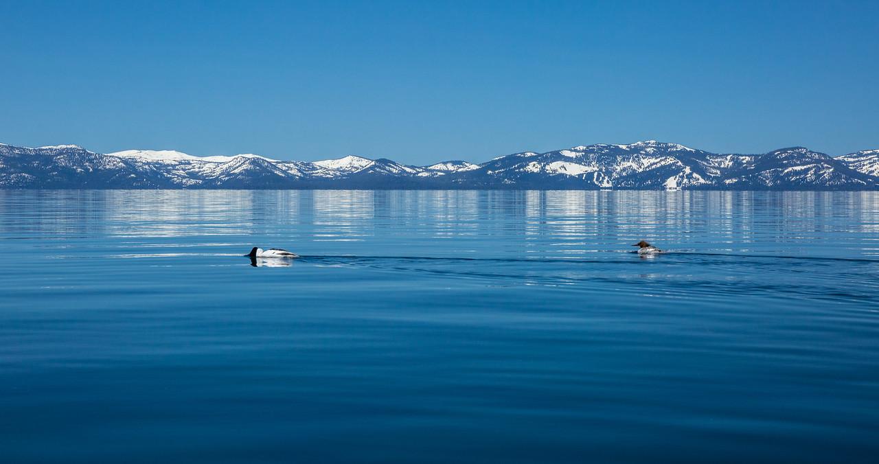 Ducks Across the Lake