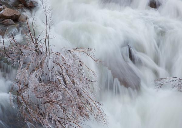 Frozen Willow in Eagle Falls