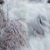 Frozen Willow in Eagle Falls