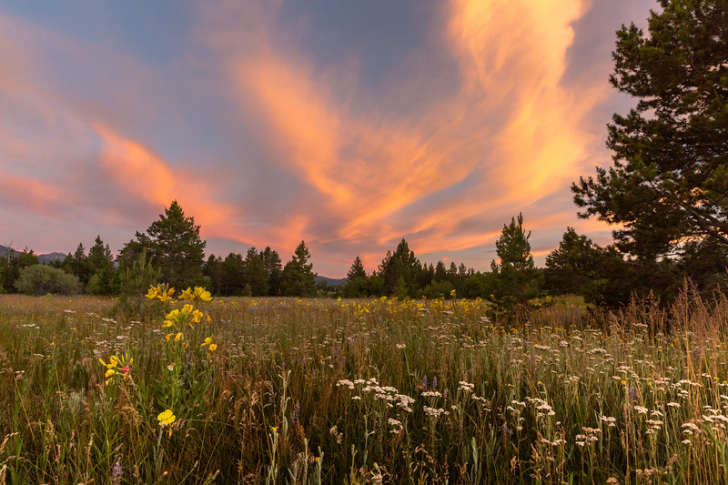 Abundant Wildflowers and Striking Clouds