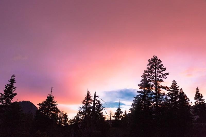 Purple Haze Above a Forest Silhouette