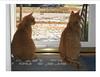 Clark and Presto pondering a difficult decision...