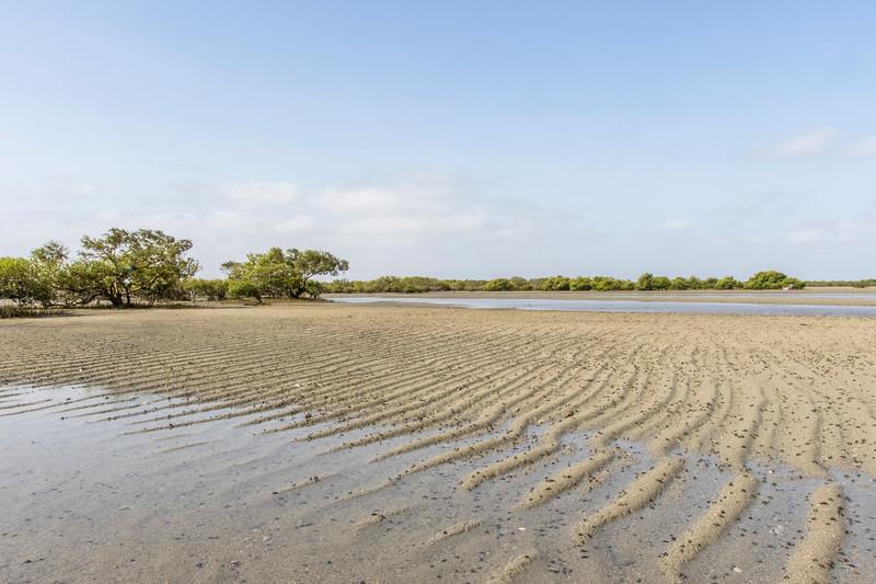 mangrove forest at narara mnp