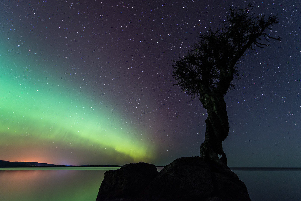 "AURORA 3510<br /> <br /> ""Ancient Cedar Aurora""<br /> <br /> April 11, 2015 - Northern Lights over Lake Superior in Grand Portage, MN."