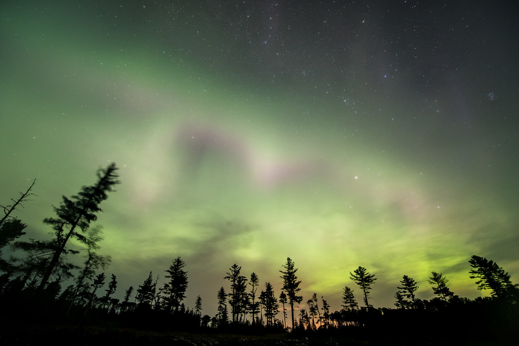 "AURORA 8788<br /> <br /> ""Aurora in the Pines""<br /> <br /> Northern Lights on August 16, 2015"