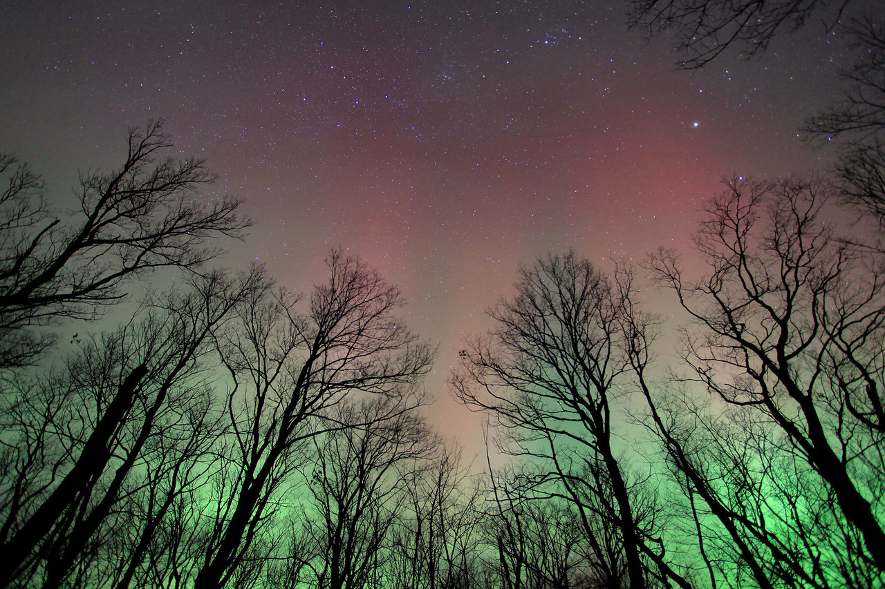 "AURORA 7685<br /> <br /> ""Northern Lights and Maple Trees""<br /> <br /> October 25, 2011"