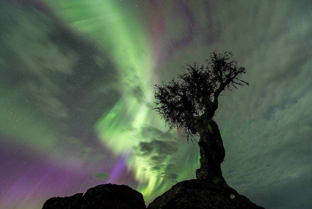 "AURORA 7834<br /> <br /> ""The Tree and the Northern Lights""<br /> <br /> Aurora Borealis on May 8th, 2016"