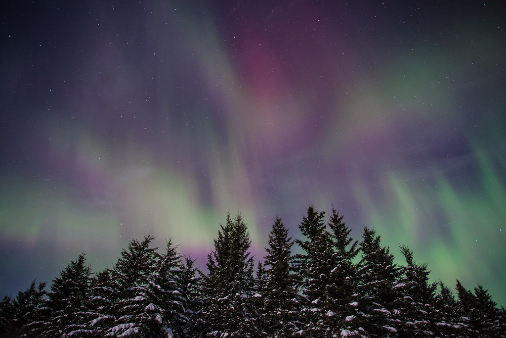 "AURORA 1613<br /> <br /> ""Purple Sky over Spruce Forest""<br /> <br /> Northern Lights on February 19, 2014"