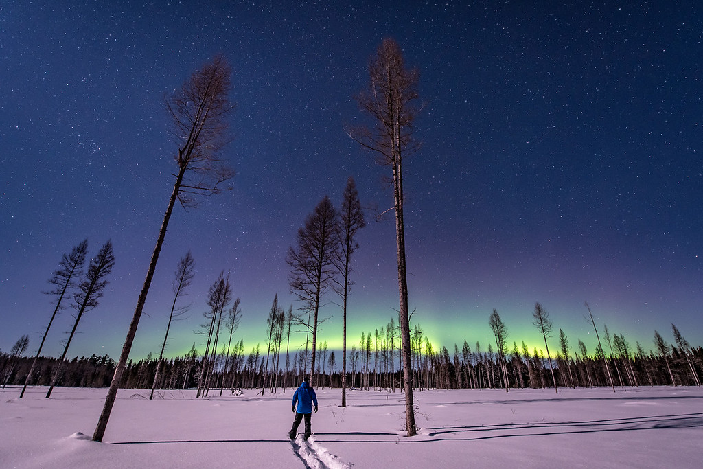 """AURORA 6776<br /> <br /> """"A Head Full of Dreams""""<br /> <br /> Superior National Forest - February 17, 2016"""