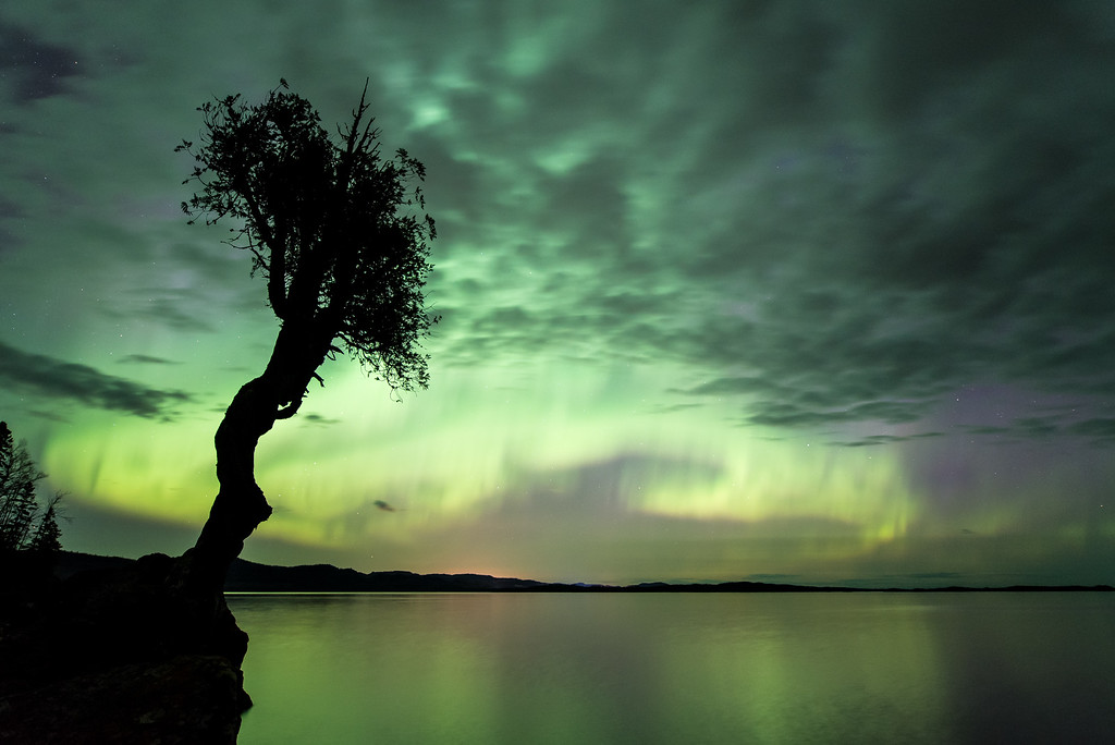 "AURORA 7819<br /> <br /> ""Early Morning on Mother's Day at the Spirit Tree""<br /> <br /> Northern Lights in Grand Portage, MN on May 8, 2016"