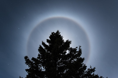"""Moon Ring and Spruce Tree"""