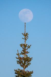 """""""Balancing the Moon"""""""