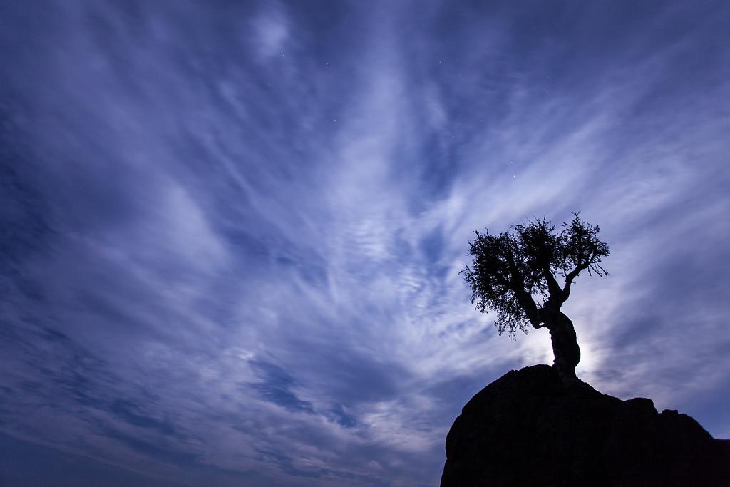 """MOONLIGHT 8976<br /> <br /> """"August Moonlight, Spirit Tree""""<br /> <br /> Grand Portage, MN"""