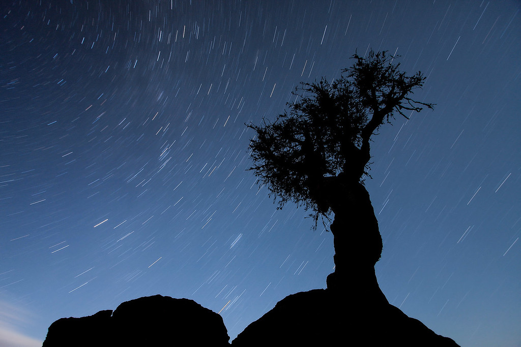 "STAR TRAILS<br /> <br /> ""Spinning Sky over the Spirit Tree"""