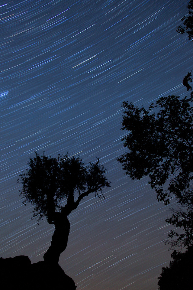 """STAR TRAILS 6335<br /> <br /> """"Celestial Showers""""<br /> <br /> 28 minute exposure of the night sky over the Spirit Tree on September 19, 2009."""