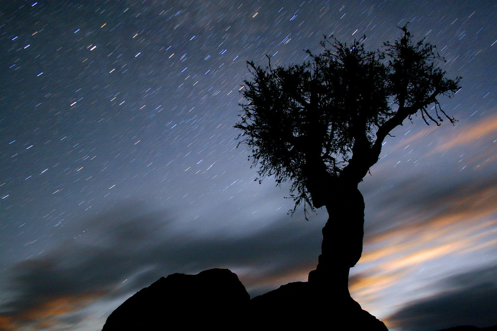 """STAR TRAILS 5174<br /> <br /> """"Visual Journey""""<br /> <br /> A 3 minute, 22 second exposure of the rising moon behind the tree and star trails streaking through the sky."""