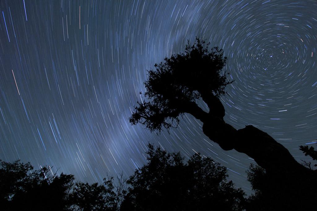 "SPIRIT TREE 4957<br /> <br /> ""Spirits in the sky"""