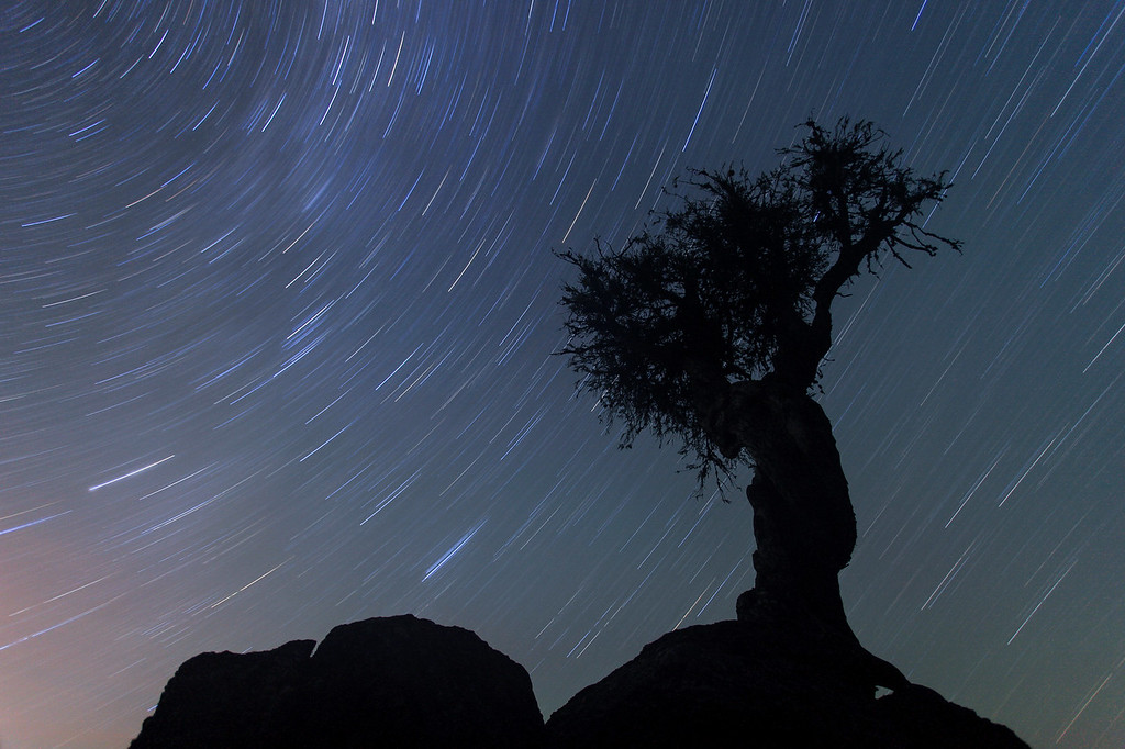 "STAR TRAILS 4960<br /> <br /> ""Late Night Star Trails over the Spirit Tree"""