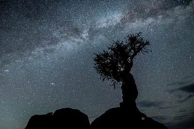 """August Milky Way and the Spirit Tree"""