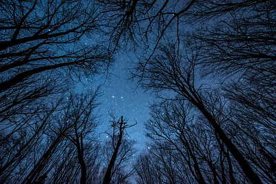 """MILKY WAY 1992  """"Quiet Night in the Maple Forest"""""""