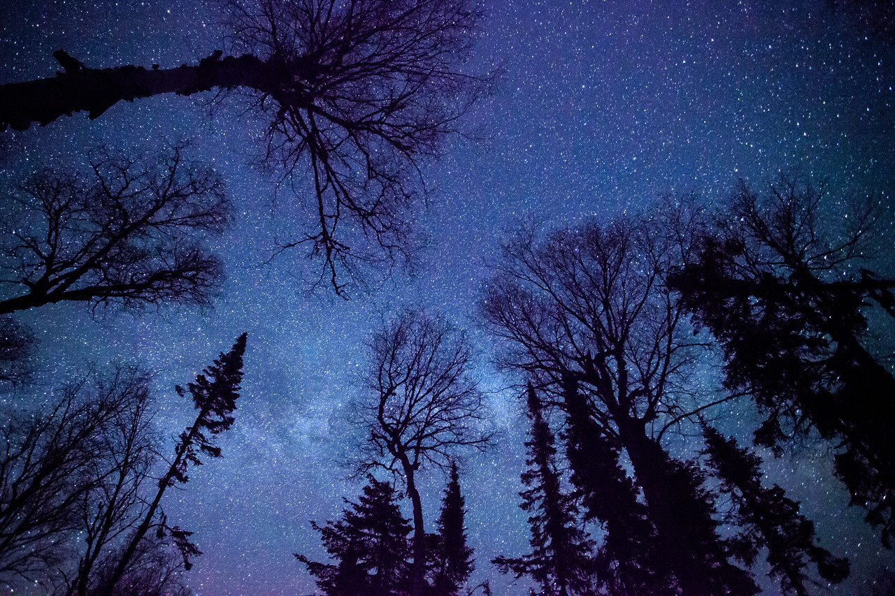 """MILKY WAY 5947<br /> <br /> """"Forest View of the Milky Way"""""""