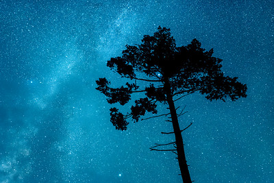 """MILKY WAY 8449  """"White Pine and the Milky Way"""""""