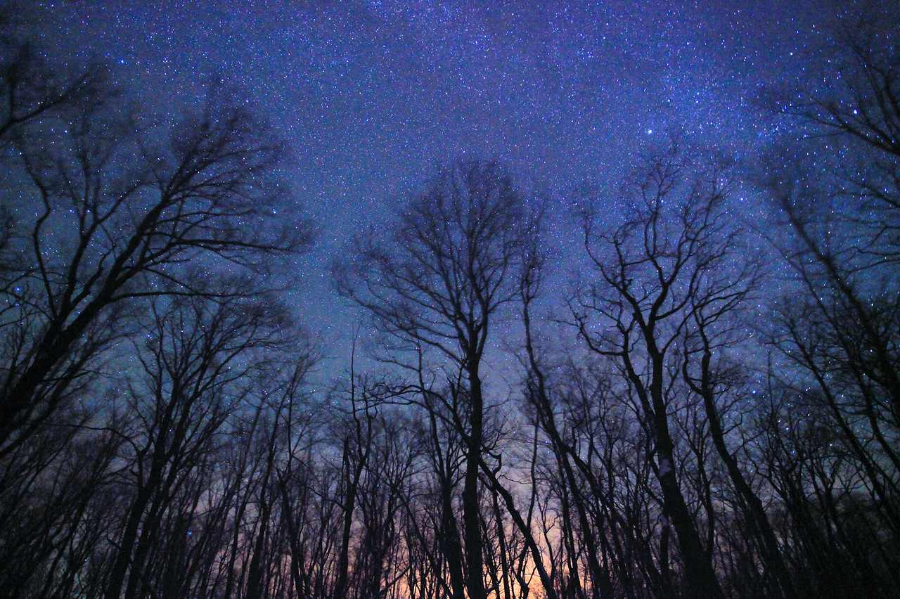 """MILKY WAY 6077<br /> <br /> """"Starry Night in the Maple Forest""""<br /> <br /> """"For my part I know nothing with any certainty, but the sight of the stars makes me dream.""""  <br /> <br /> -Vincent van Gogh"""