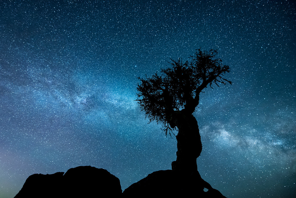 "MILKY WAY 76212<br /> <br /> ""The Milky Way and The Tree"""