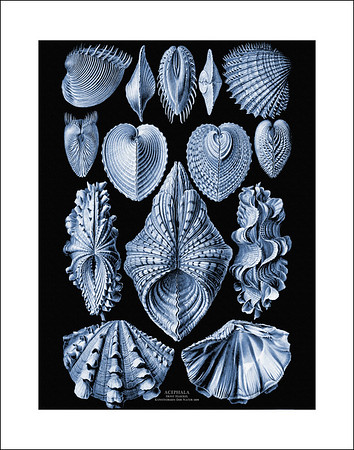 Ernst Haeckel Prints on Black