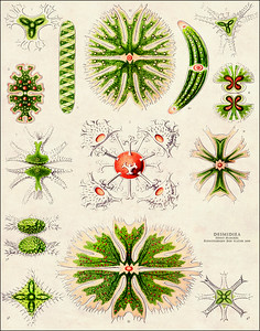Ernst Haeckel without Borders
