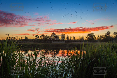 Phinizy Swamp Sunrise - Augusta GA