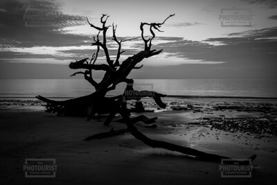 Driftwood Beach Sunrise - Jekyll Island GA