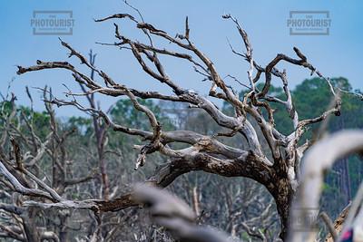 Driftwood Beach - Jekyll Island GA