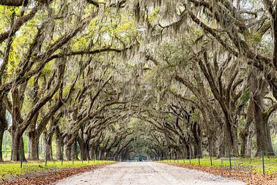 Wormsloe Plantation - Savannah