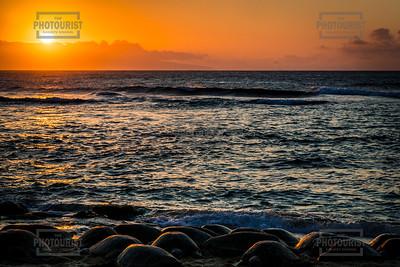 Green Sea Turtles on Hookipa Beach Sunset - Maui Hawaii