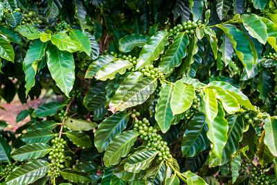 Kauai Coffee Company - Hawaii