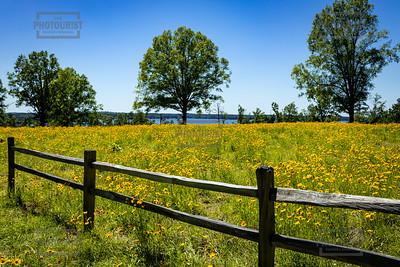 Flower Field at Clarks Hill Recreactional Area - SC