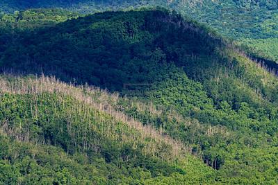 Great Smoky Mountains - Gatlinburg TN