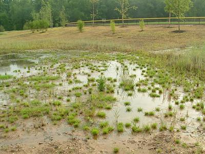 2011-05-23 Meadow