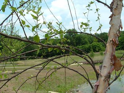 2011-06-21 Meadow & Caterpillar